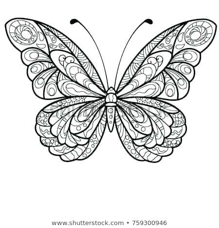 450x470 drawing butterfly draw butterfly monarch butterfly drawing simple
