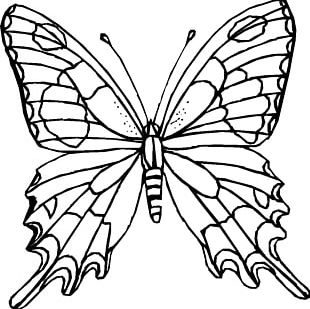 310x309 Monarch Butterfly Drawing Coloring Book Tattoo Png, Clipart