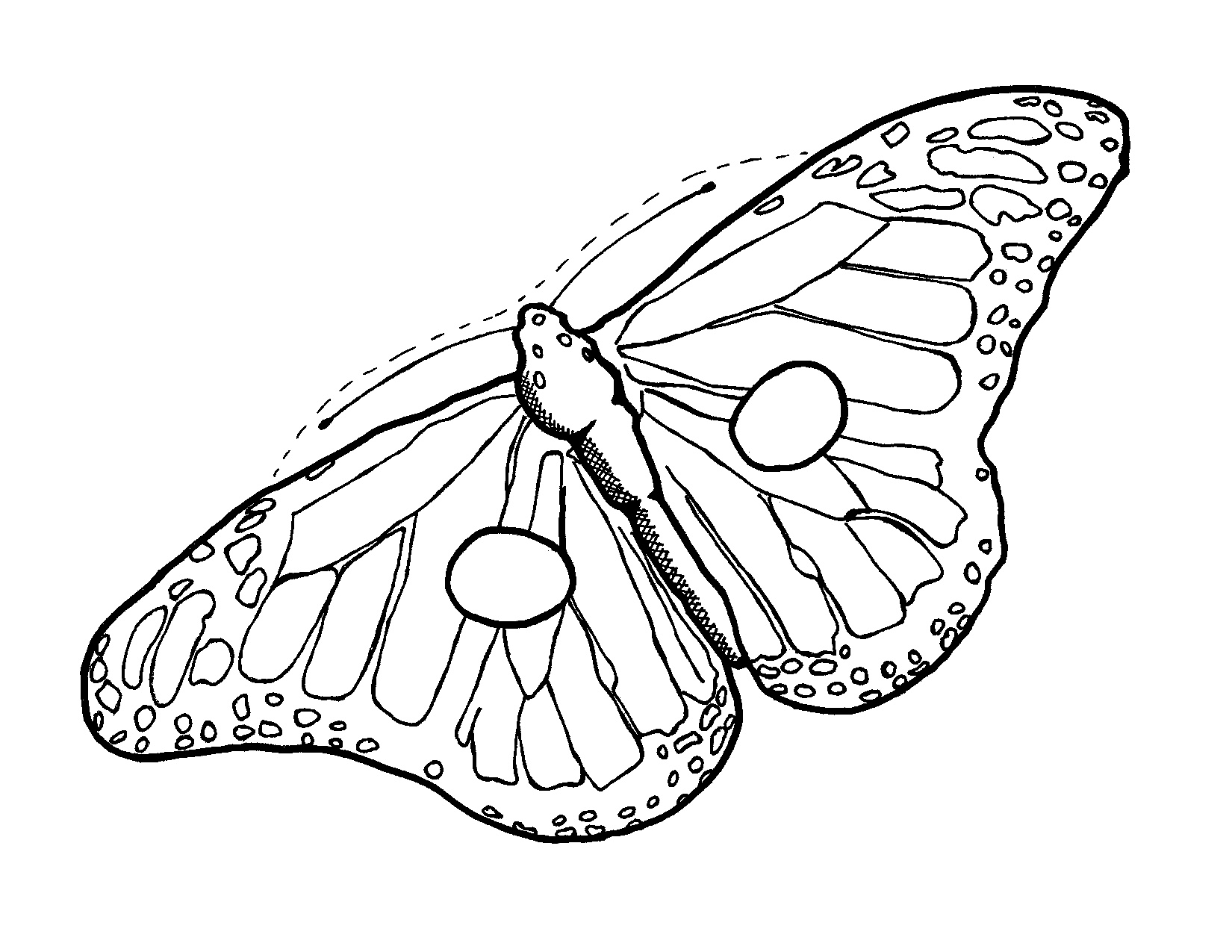 1650x1275 Arts Butterfly Outline Drawing Gorgeous Image Result For Monarch