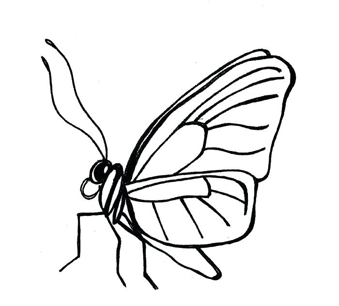 700x632 Simple Butterfly Drawing Monarch Butterfly Drawing Black And White