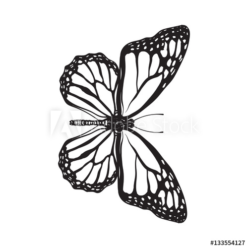 500x500 Top View Of Beautiful Monarch Butterfly, Sketch Illustration