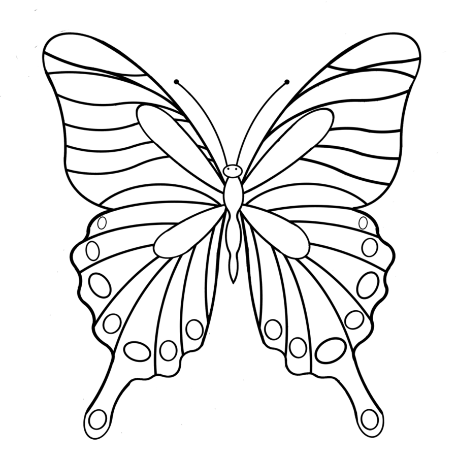 900x900 Butterfly, Drawing, White, Transparent Png Image Clipart Free