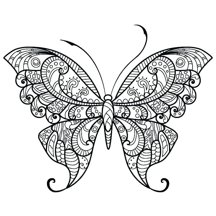 736x736 Butterfly Color Pages Symmetrical Drawing Pages Printable
