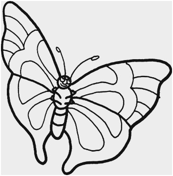 354x360 Butterfly Outline Clipart Unique Butterfly Outline Line Drawing