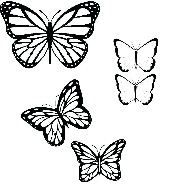 736x761 Butterfly Pencil Drawing Outline Monarch Butterfly Outline