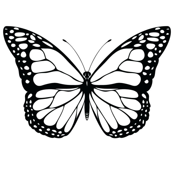 736x736 Butterfly Pictures To Draw Please Easy Butterfly Pictures To Draw