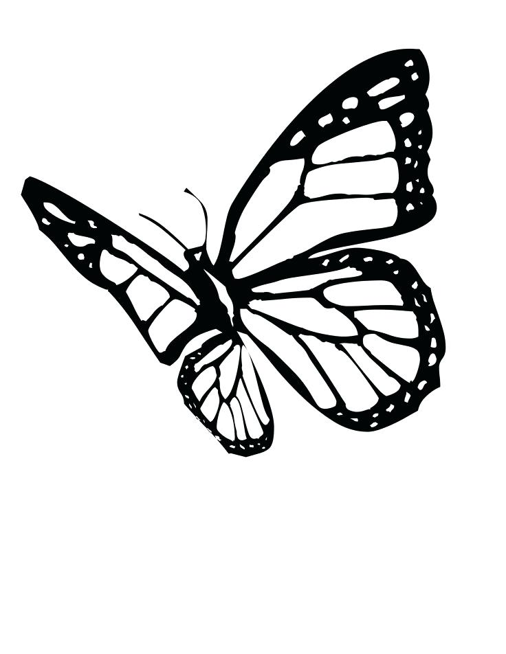 736x952 monarch butterfly pictures to color drawn butterfly monarch