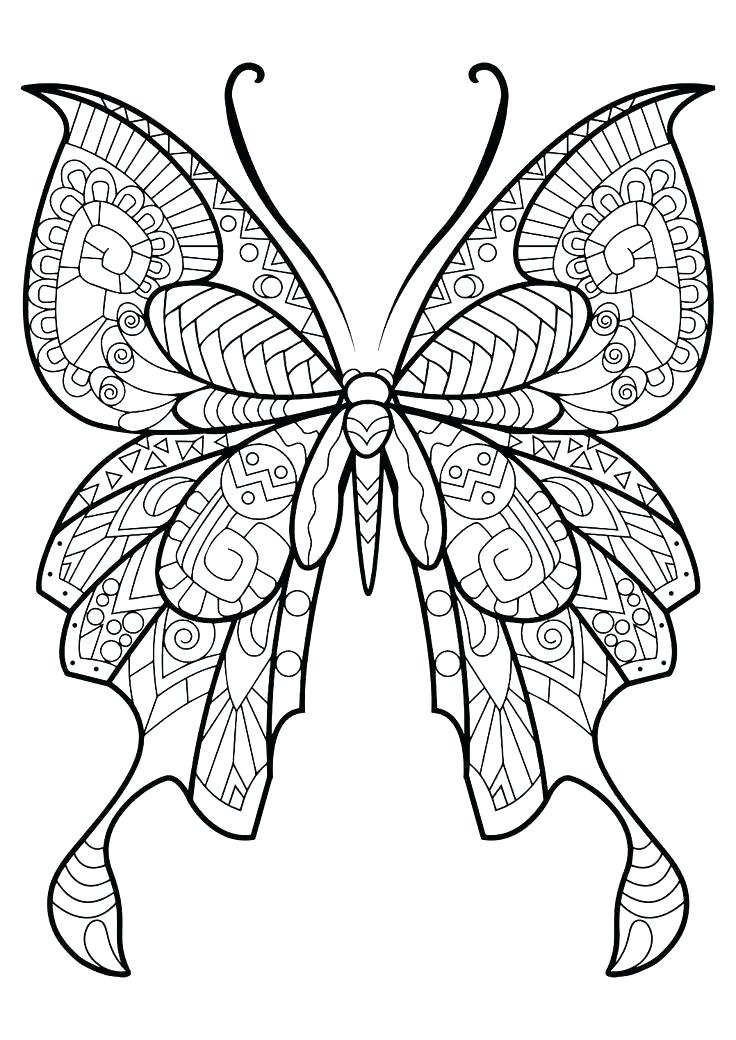 736x1040 appealing monarch butterfly coloring pages realistic monarch