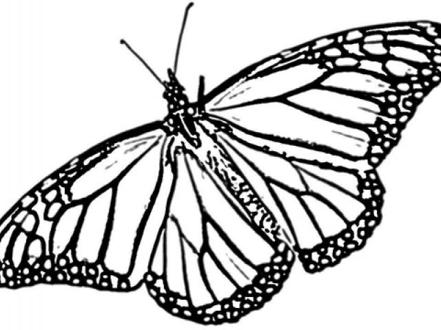 640x480 Monarch Butterfly Drawing