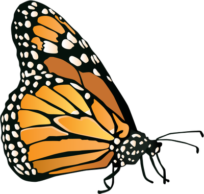 400x380 Monarch Butterfly Drawing Clipart