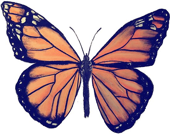 550x432 Monarch Butterfly Drawing Posters