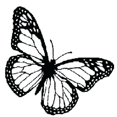 400x400 Monarch Butterfly Line Drawing At Free For Template Art