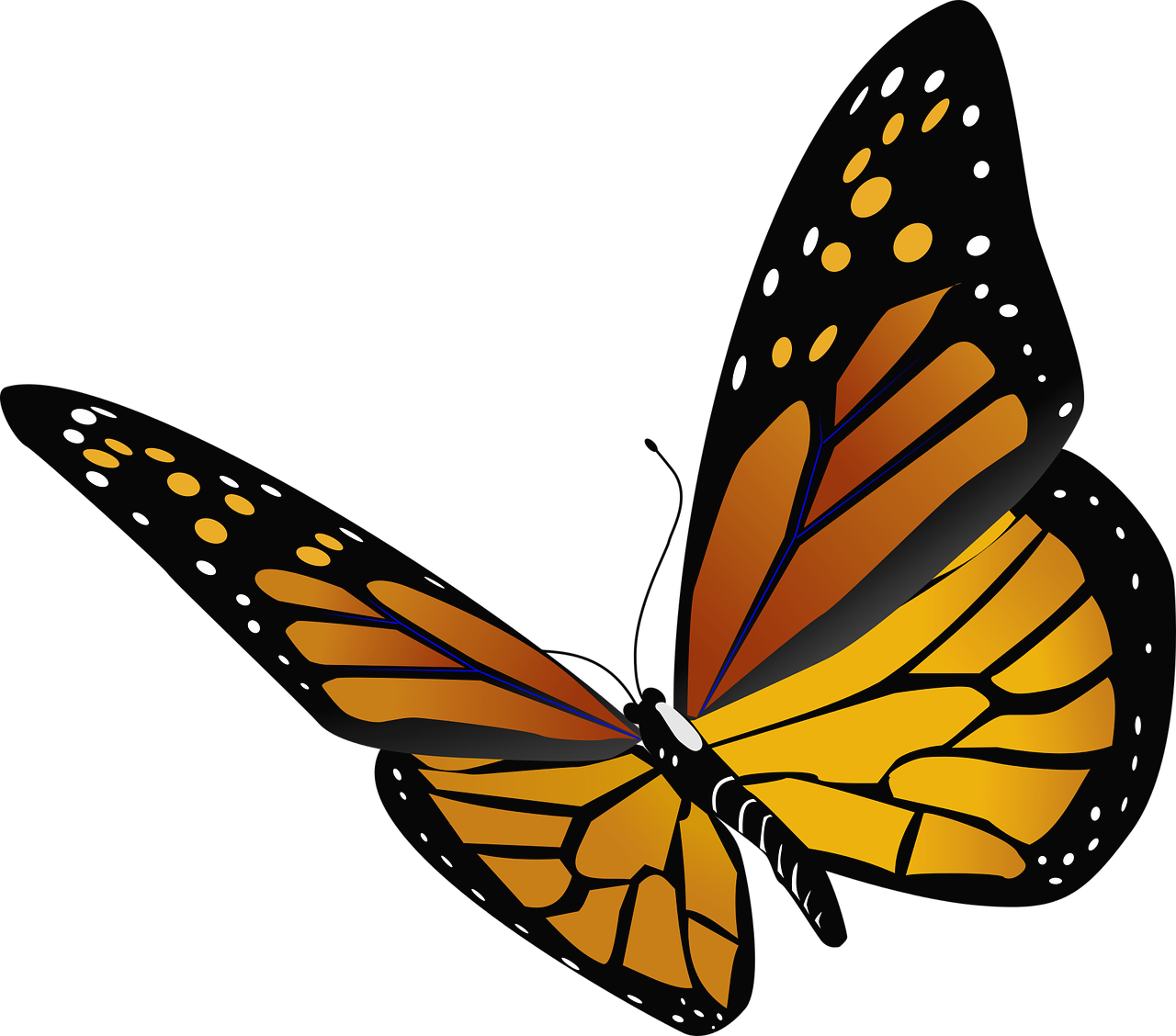 1280x1128 Monarchy Drawing Monarch Butterfly Frames Illustrations Hd