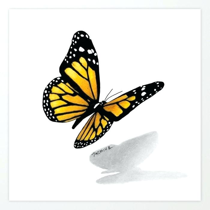 700x700 Buterfly Drawing