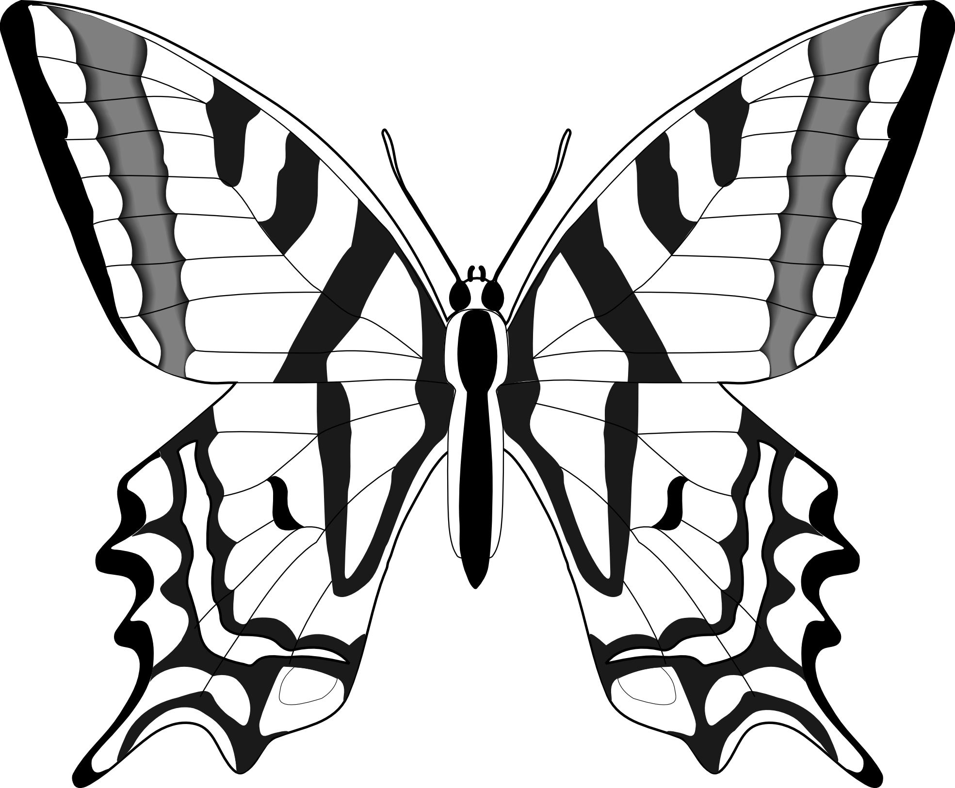 1969x1626 Butterfly Cartoon Drawing Easy Wings Monarch Side View And Flower