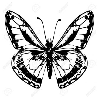 336x336 Butterfly Wings Line Drawing Monarch Clipart Flower A Outline