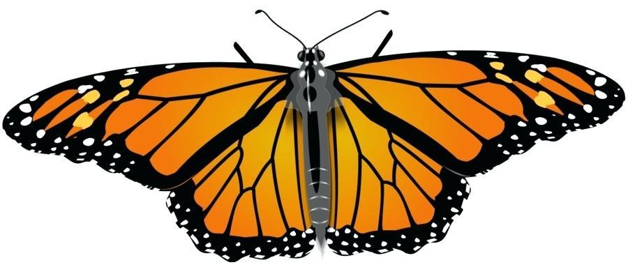 900x380 Clipart Monarch Butterfly Monarch B Free Clip Art Monarch