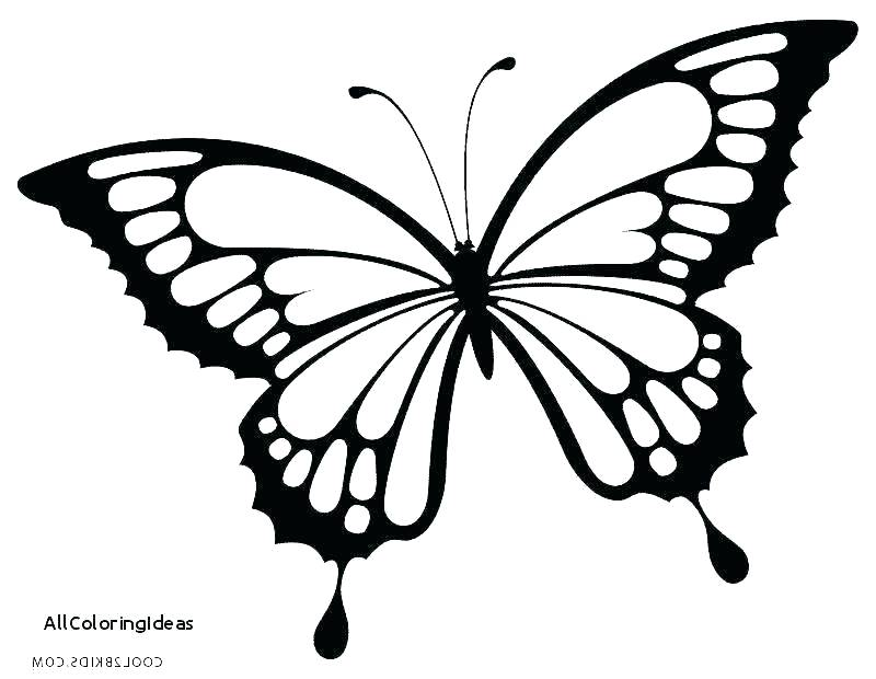 800x620 Coloring Pagesof A Butterfly Monarch Butterfly Coloring