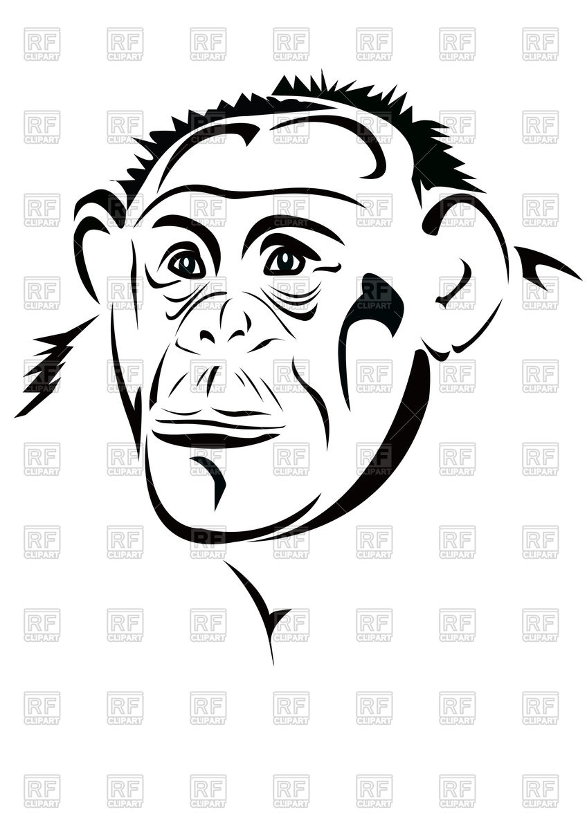 848x1200 Monkey's Head Vector Image Of Plants And Animals Georgyfedotov