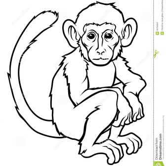 336x336 Monkey Drawing Images Cartoon Pdf Head Easy Step