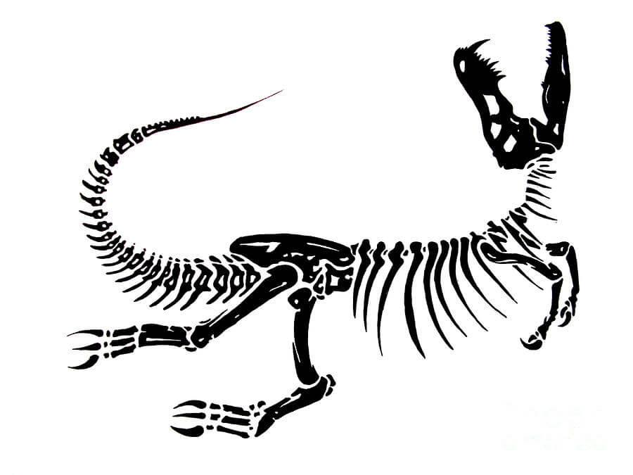 900x675 Dinosaur Bones Drawing Extinction Jack Norton Montana Natural