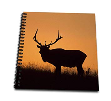 355x323 Elk Or Wapiti, Cervus Elaphus, Bull Silhouetted