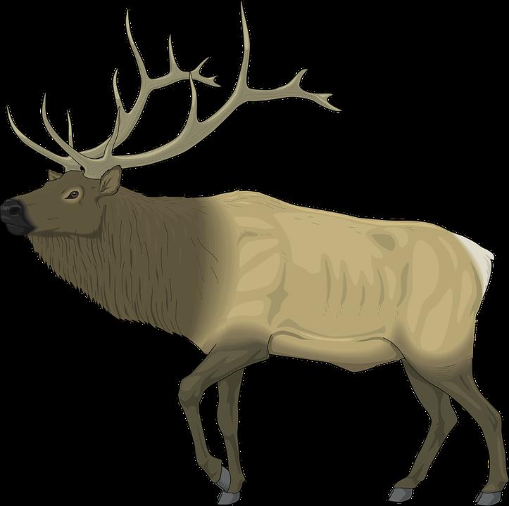 Moose Face Drawing