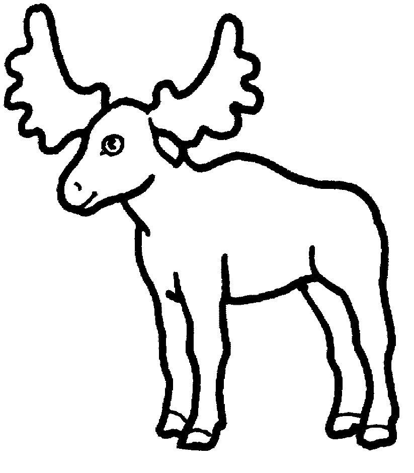 Moose Head Drawing