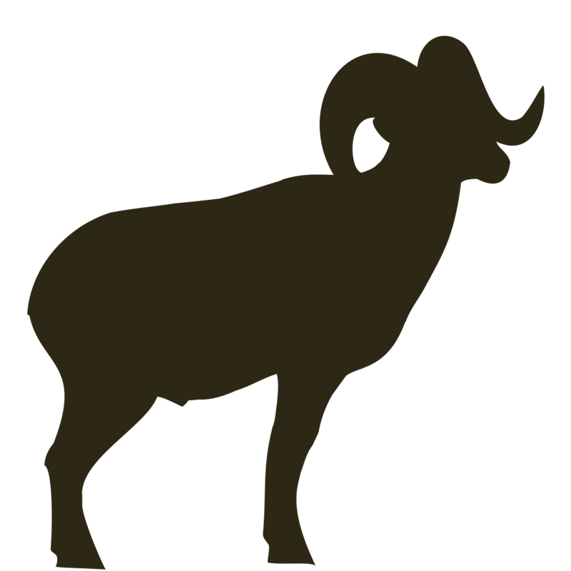 Mountain Goat Drawing | Free download best Mountain Goat