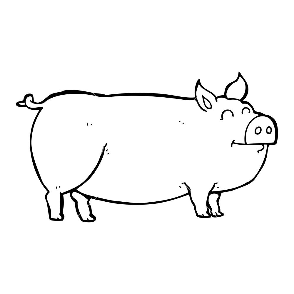 1000x1000 Freehand Drawn Black And White Cartoon Muddy Pig Royalty Free