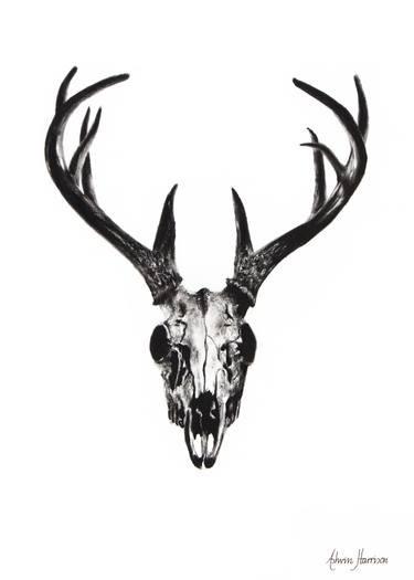 375x525 Deer Skull Drawing