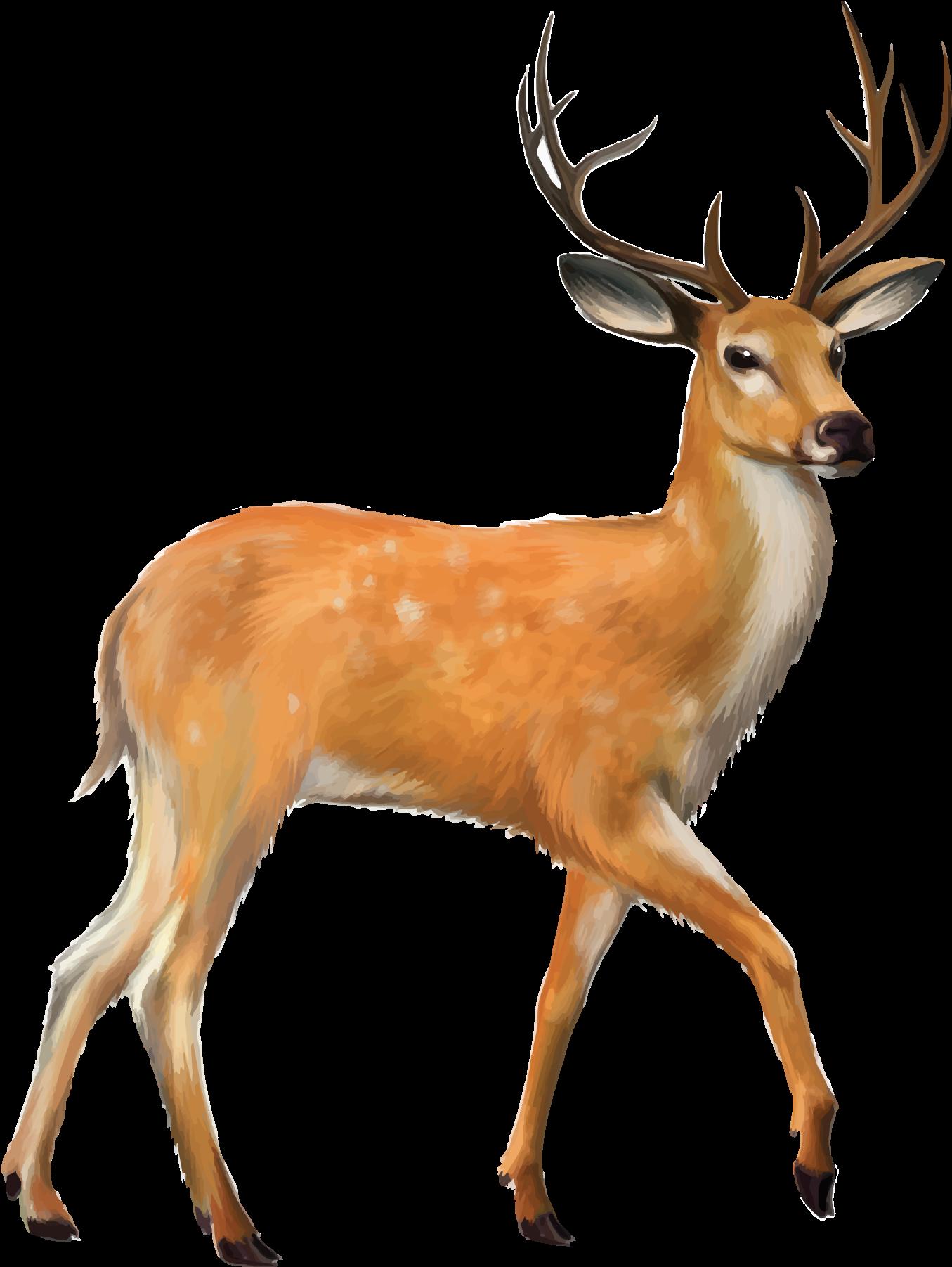 1355x1802 Download Fawn Drawing Mule Deer
