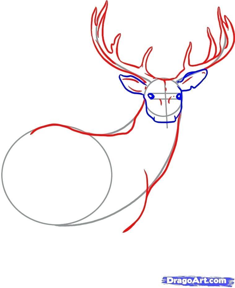 759x931 How To Draw Dear Deer Drawings Step Draw Deer Skull
