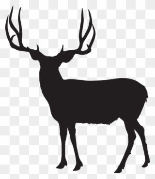 320x370 Image Royalty Free Stock Antlers Transparent Mule Deer