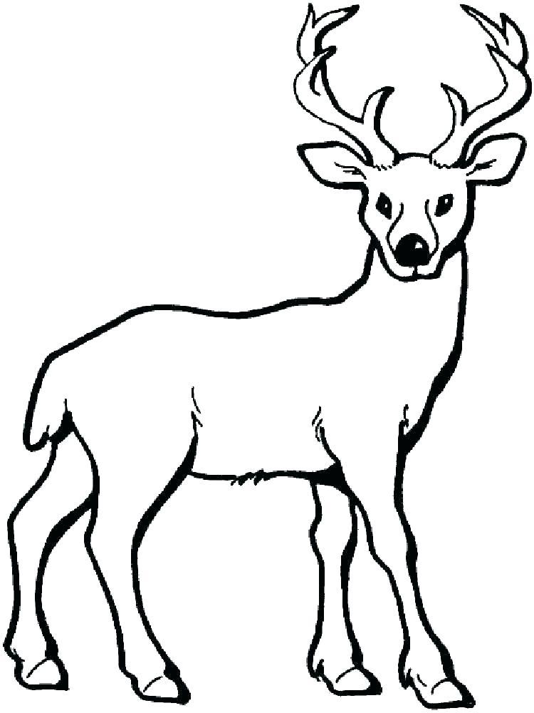 750x1000 Mule Deer Coloring Pages