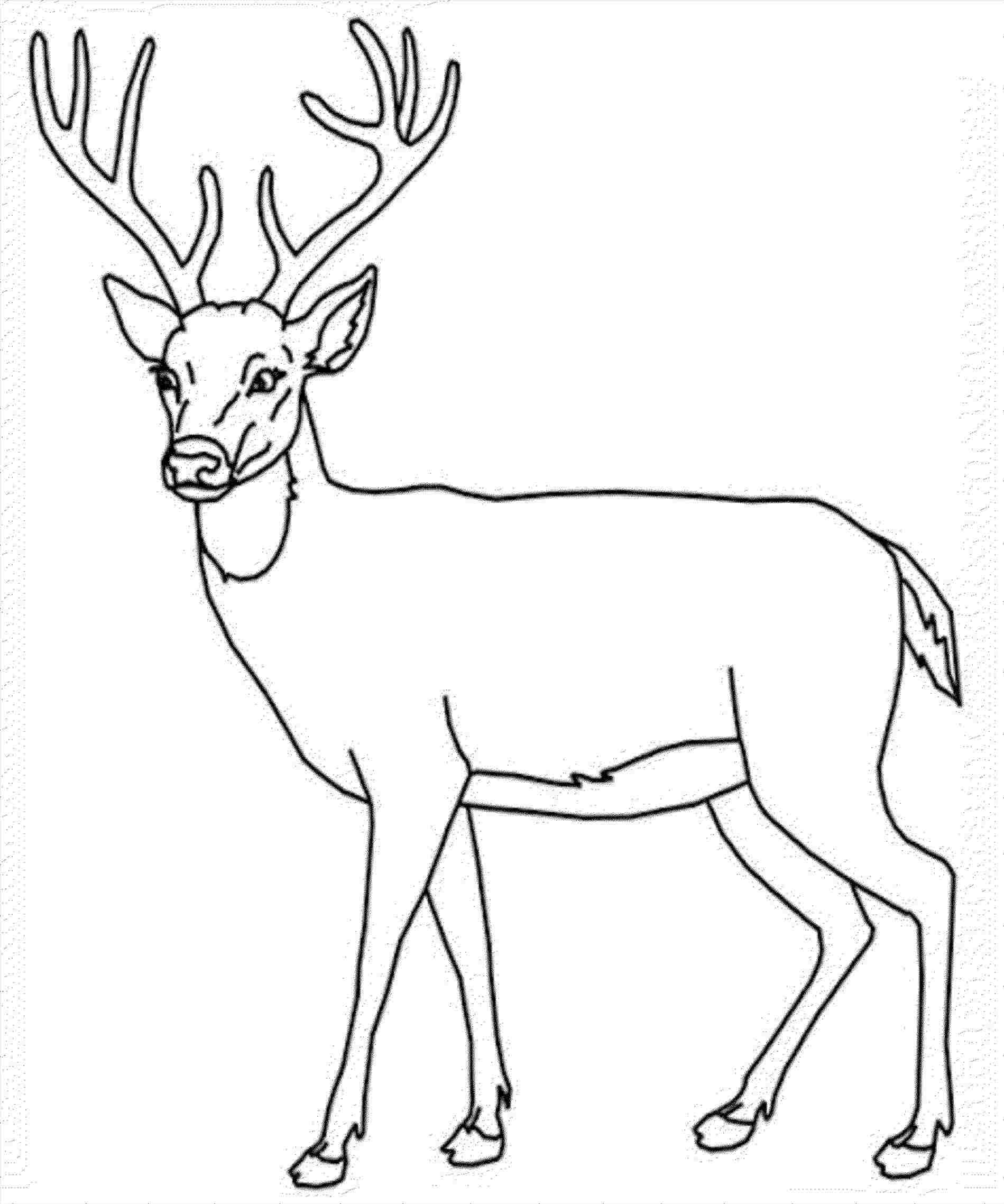 1899x2277 Mule Deer Drawing Step