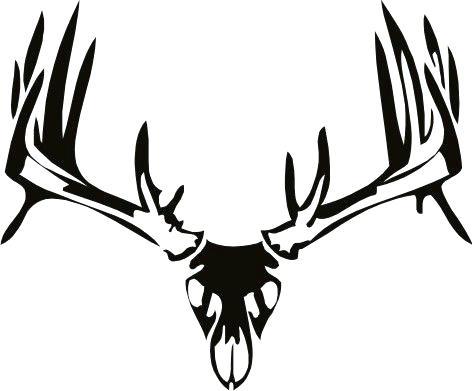 472x391 mule deer skull larger image mule deer skull drawing norths
