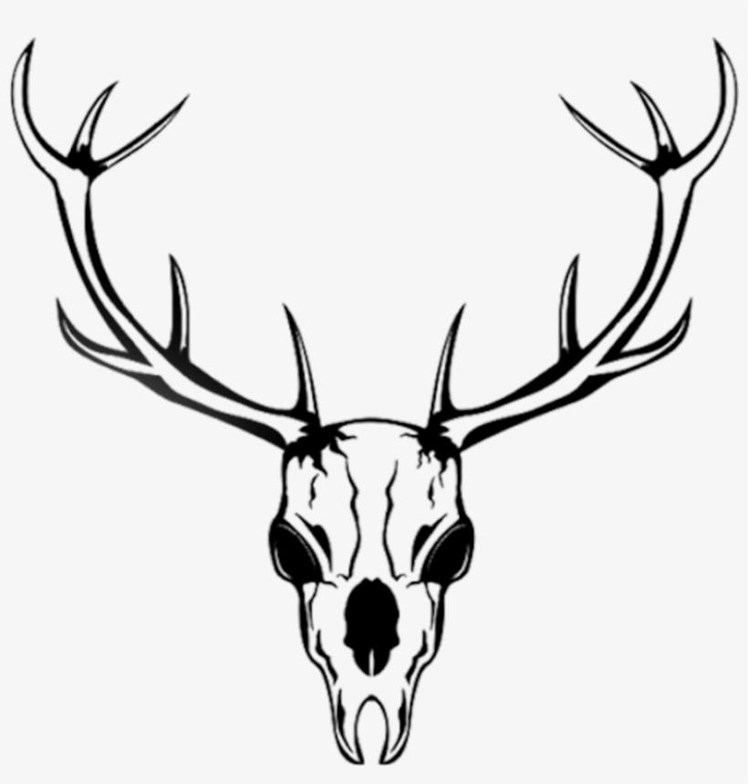 820x860 Necromancer Drawing Deer Skull