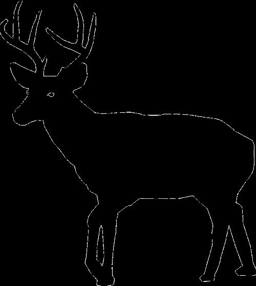 500x558 Stag Vector Mule Deer, Picture