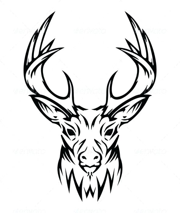 590x700 Caribou Drawing