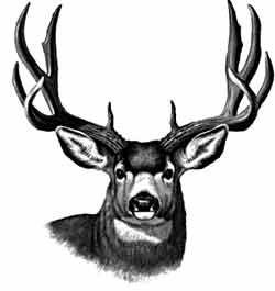 250x265 Mule Deer Pictures To Draw Pine Ridge Taxidermy Hunting Elk