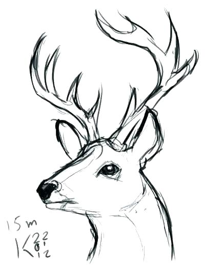 400x517 Draw A Deer Learn To Draw A Deer Hand Drawn Deer Antlers