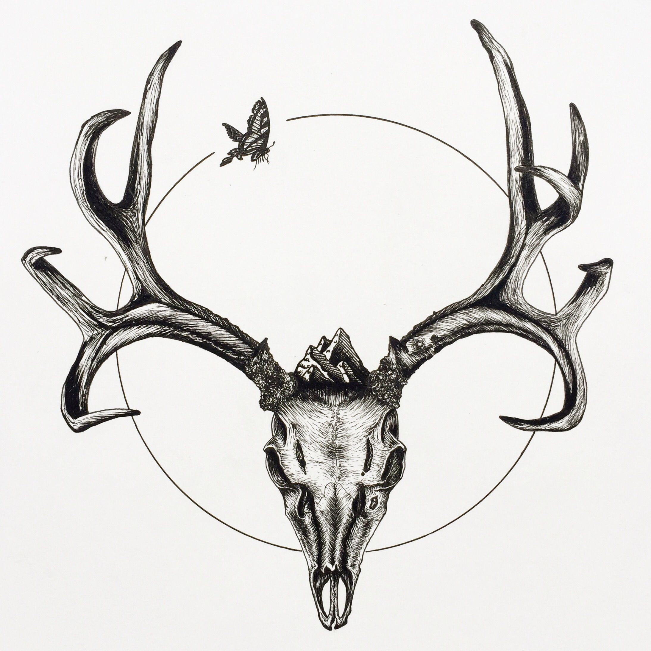 2187x2187 Mule Deer Skull With Butterfly, Ink Pen On Paper, Color