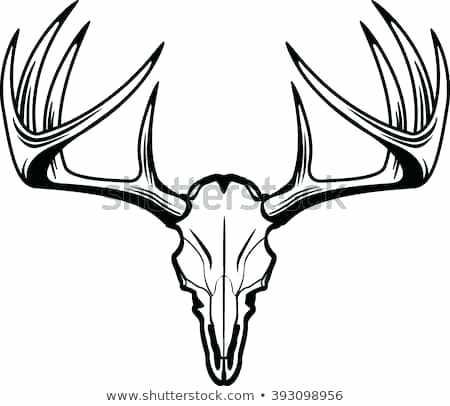 450x406 Deer Skull Pictures Ccstasteofsoul