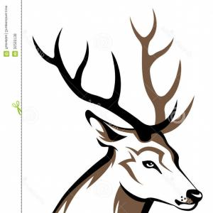 300x300 Deer Head Drawing Mule Deer Skull With Butterfly Ink Pen On Paper