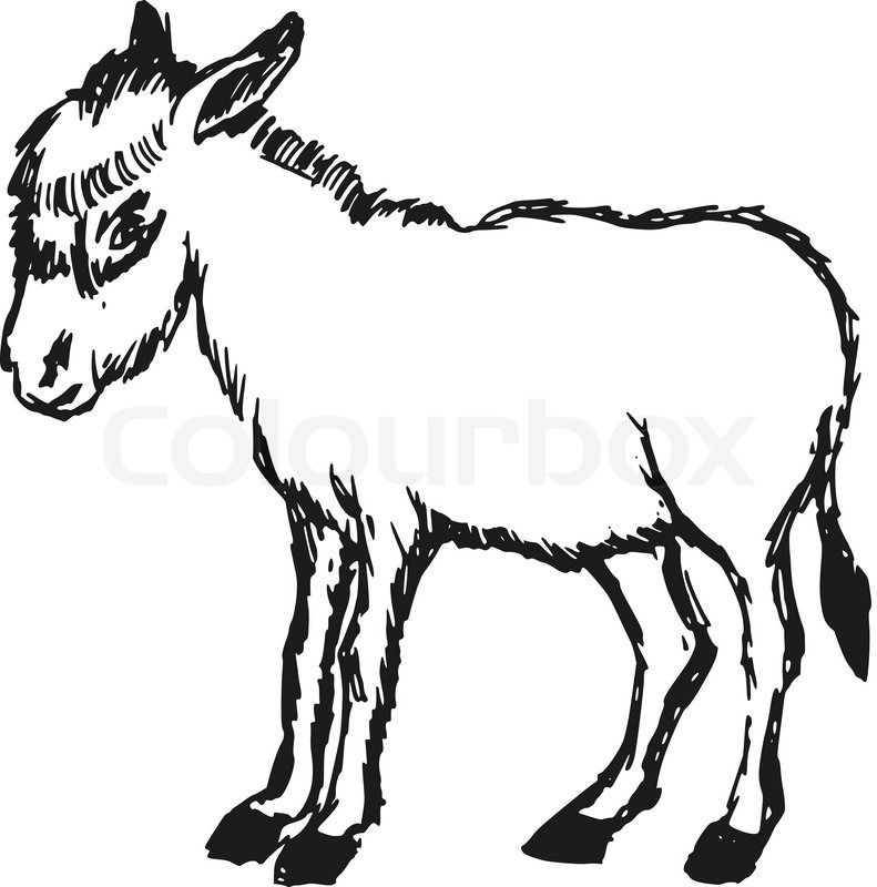 791x800 Donkey Drawing Mule For Free Download
