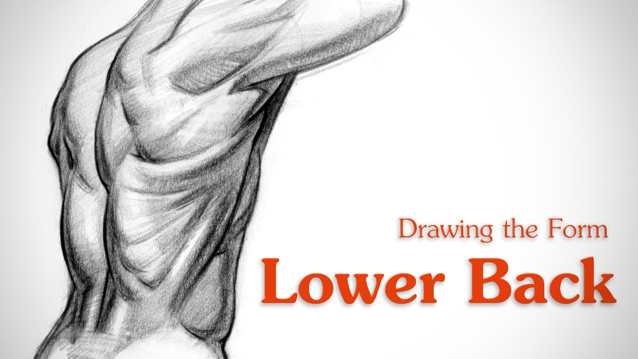 1280x720 How To Draw Lower Back Muscles