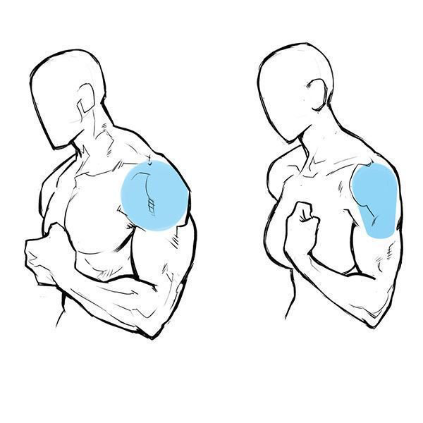 600x600 Anatomy And Muscle Drawing Human Forms Dibujo