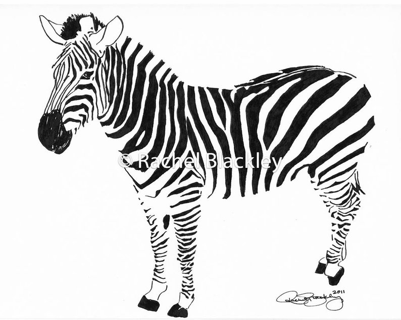 794x635 Standing Zebra Ink Sketch Ink Drawing Pen And Ink Black Etsy