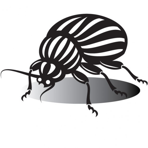 626x626 Beetle Drawing In Black And White Vector Free Download